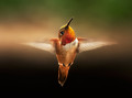 An angel named Rufous