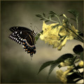 I only ask to be free-the butterflies are free - Charles Dickens