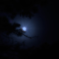 the night walked down the sky with the moon in her hand - Fredrick Knowles