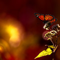 The butterfly counts not months but moments, and has time enough.