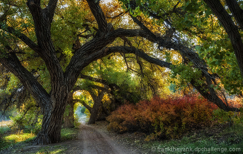 Autumn in the Cottonwoods