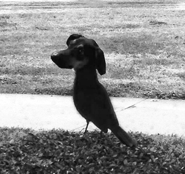 Mercy please!  1st time to ever merge photos, I did my best!  Bird Dog
