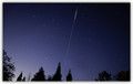 Int'l Space Station From Between The Redwoods