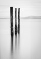 Three Pilings at Point Roberts