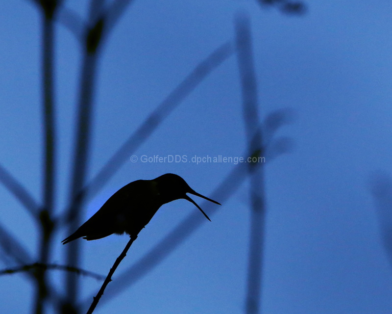A Hummingbird At The Edge Of Nightfall