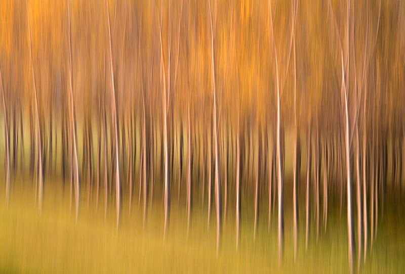Panning of Autumn's Trees