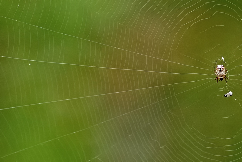 Rectangles, Angles, Lines, and Circles