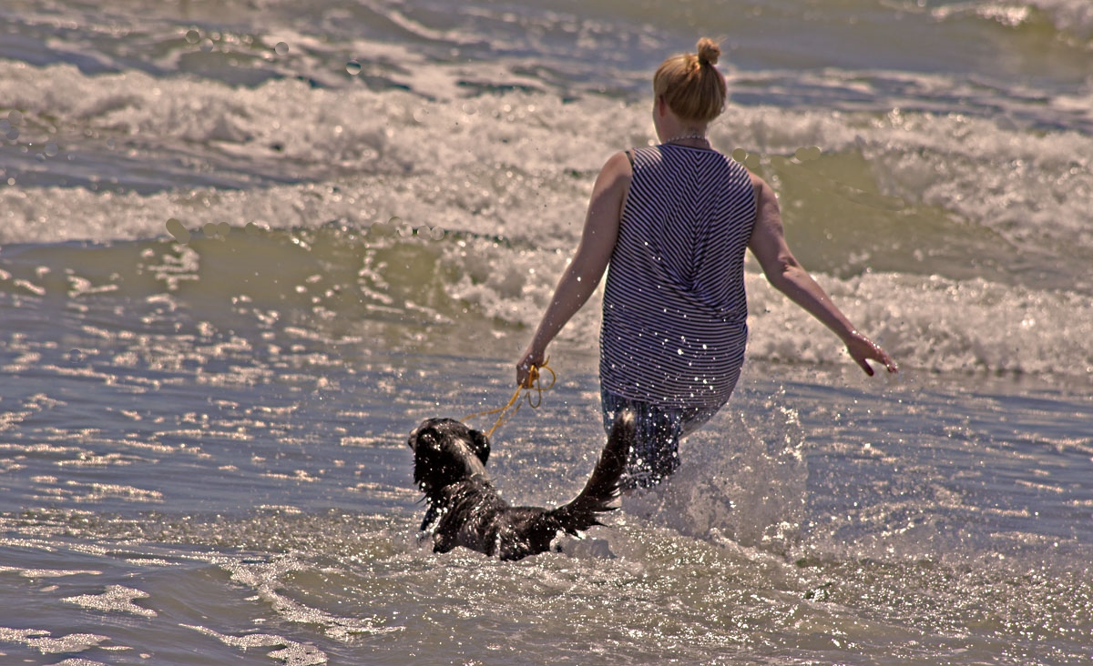 Sun,Surf, and Swimming , It's the Dogs Life in summer!!!