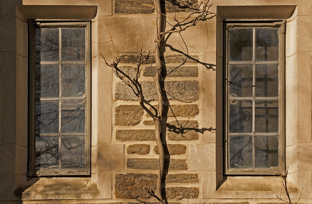Two Windows and a Vine