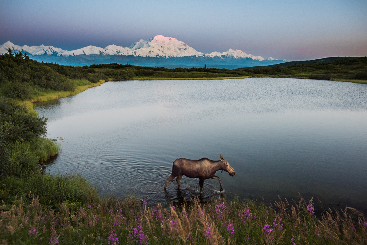 Moose and Mountain