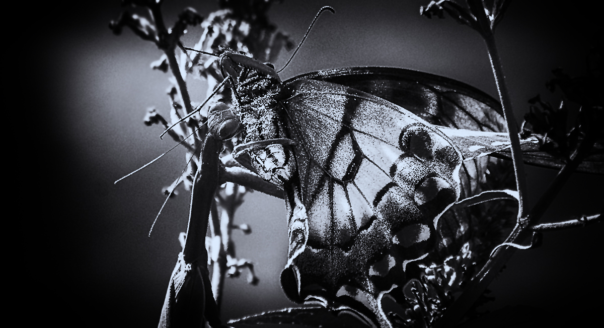 Demise of a Butterfly