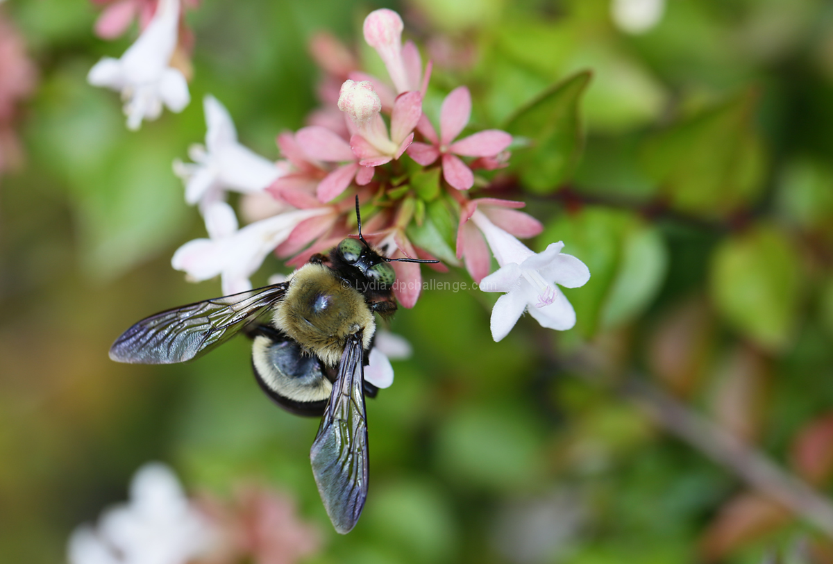A Pollinator's Endless Job Begins