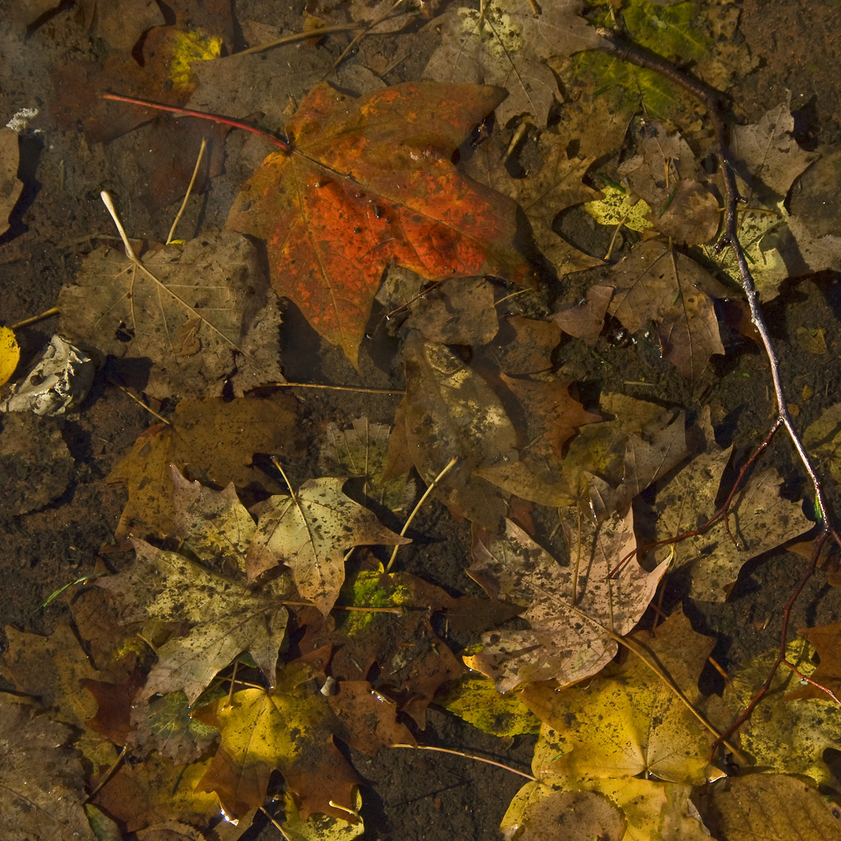Fall Puddle