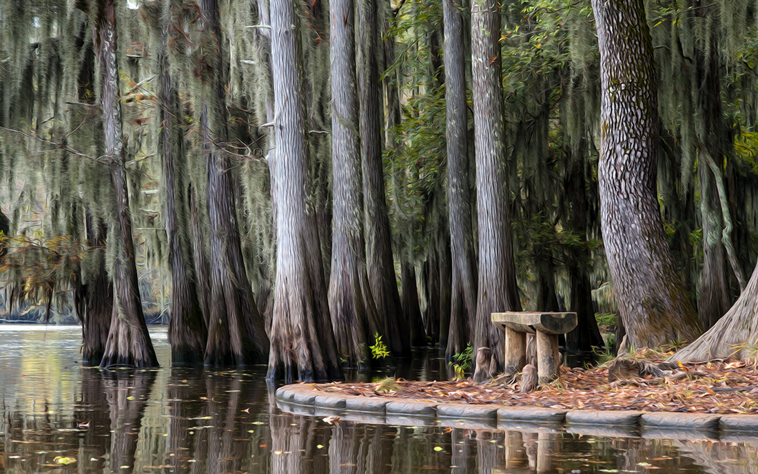 Bench on the Bayou