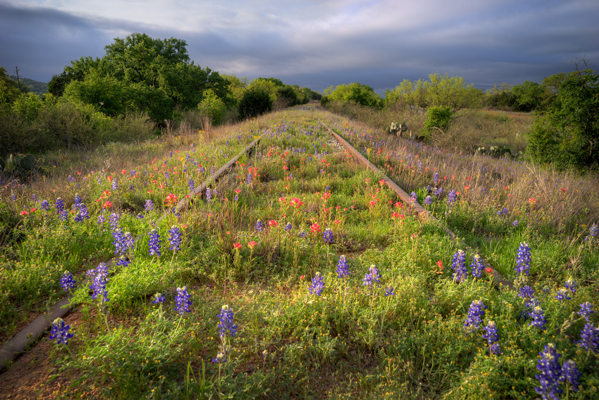 The Wildflower Line