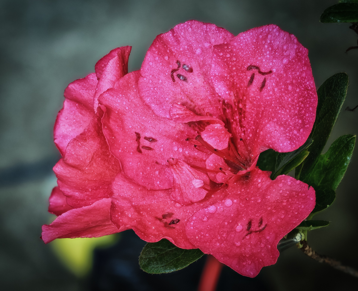 The rare Pi flower blooms but one day per year.  This year it bloomed to 5 significant digits:3.1416
