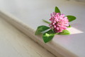 flower on windowsill