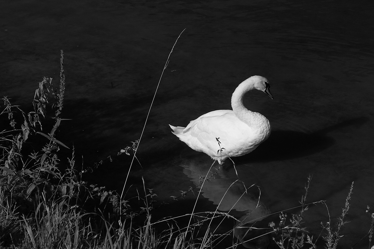 Where a swan can stand in the river...