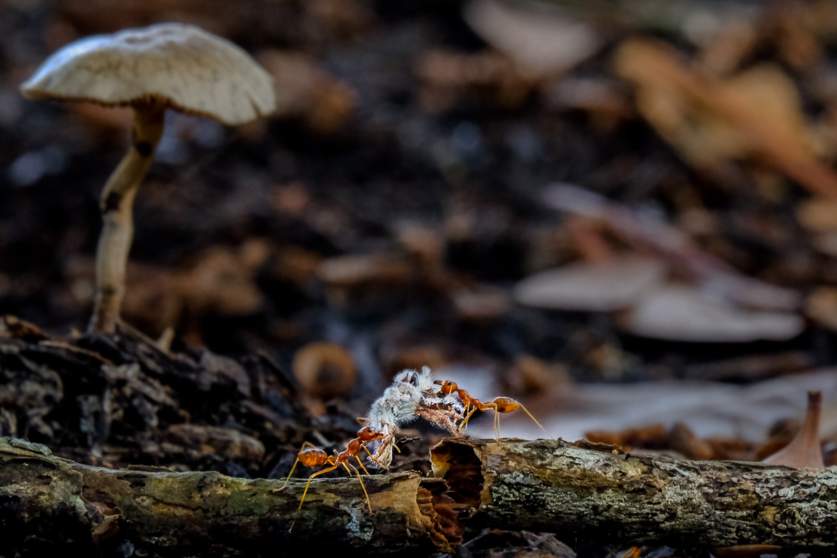 The Industrious World of Ants
