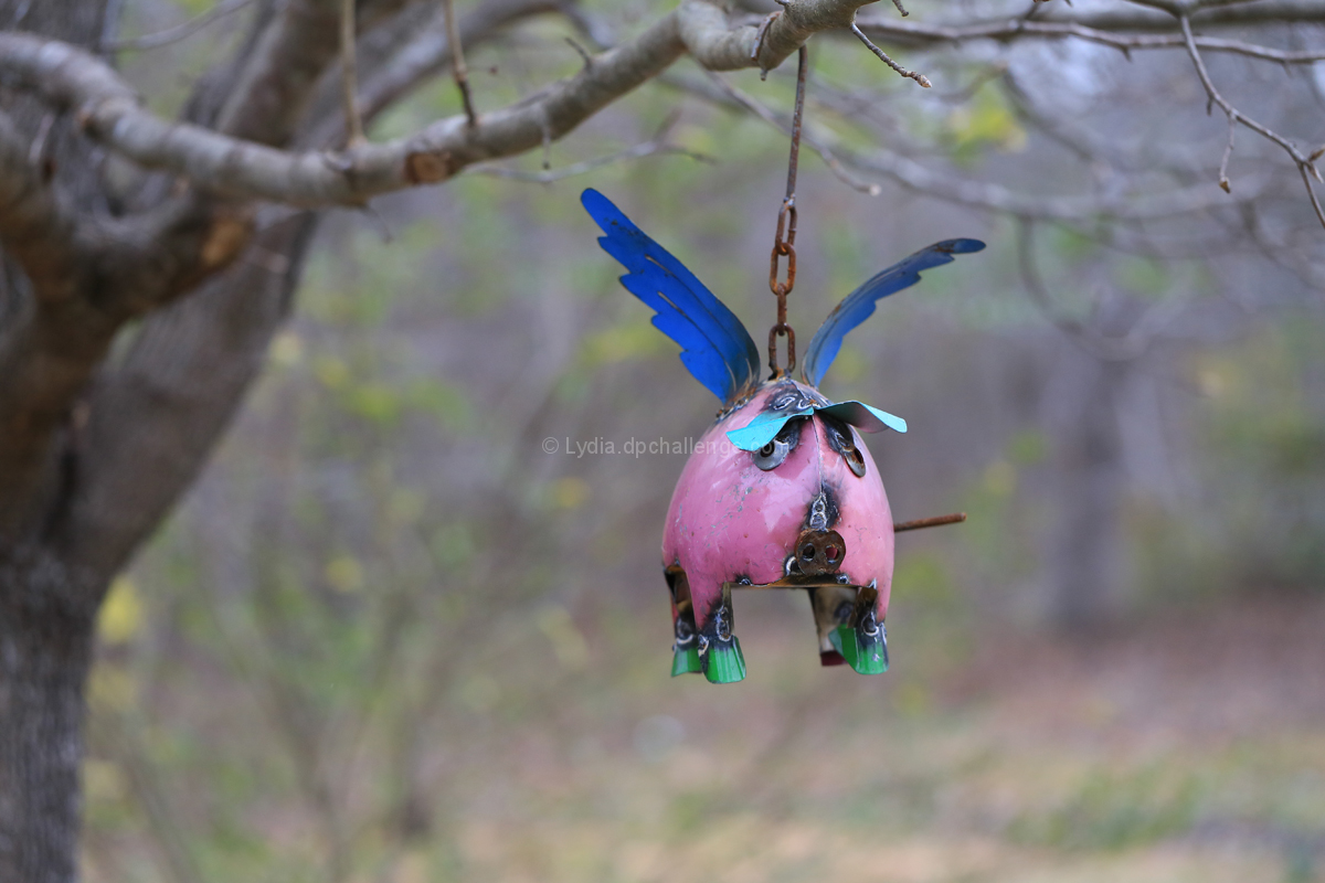 A Flying Pig Flyeth Forth