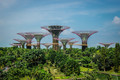 Man Made Supertrees