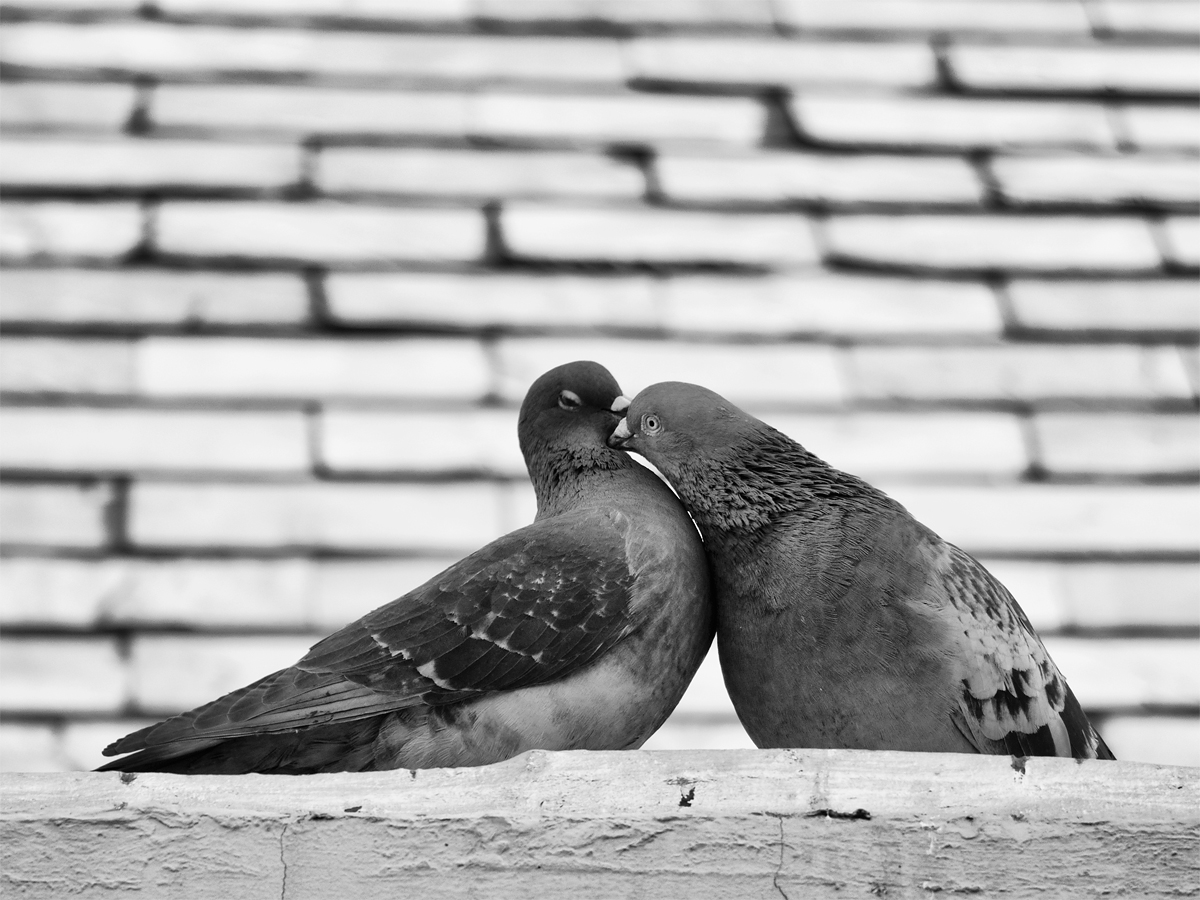 Love on the Rooftop