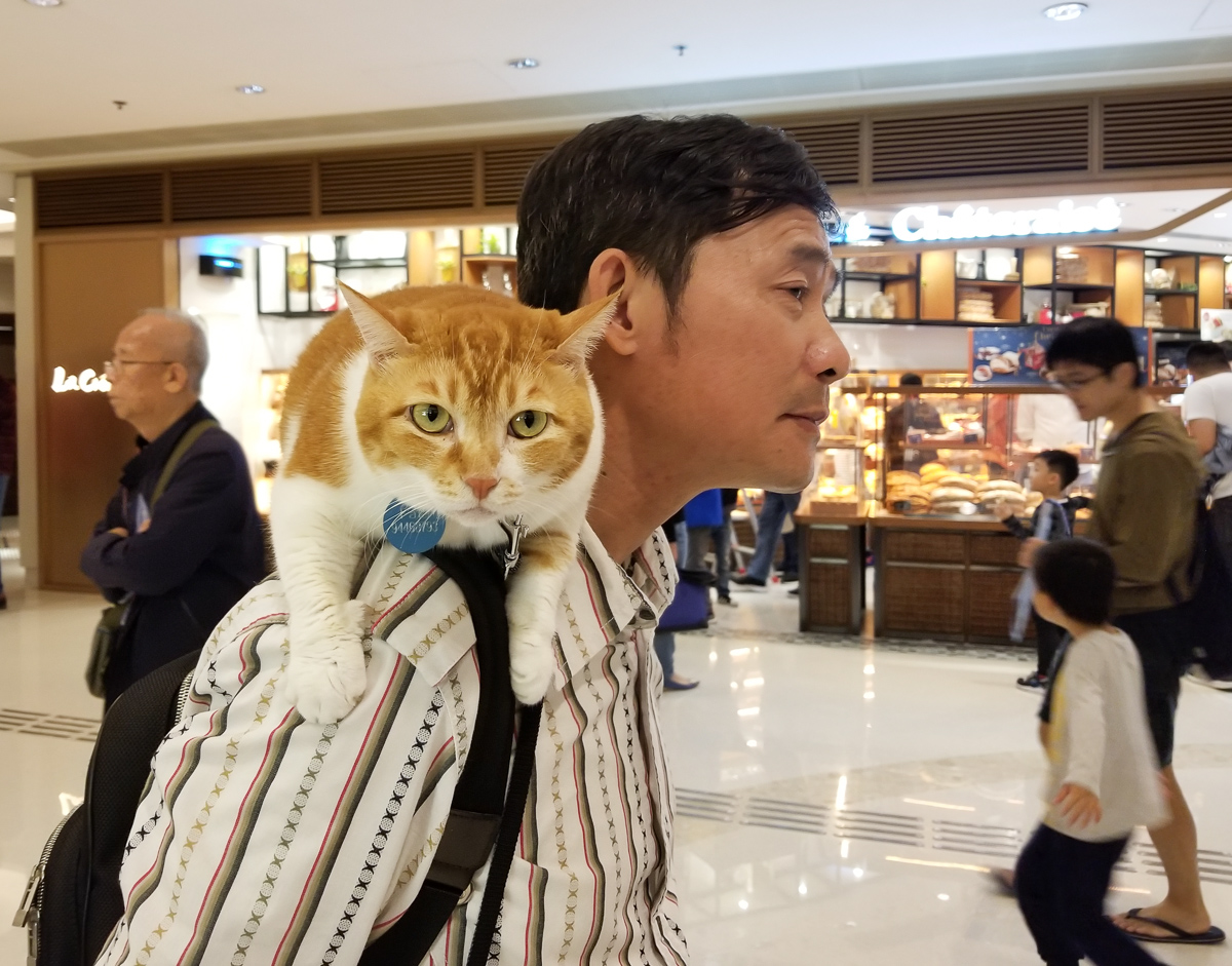 What? Never seen a cat at the mall?