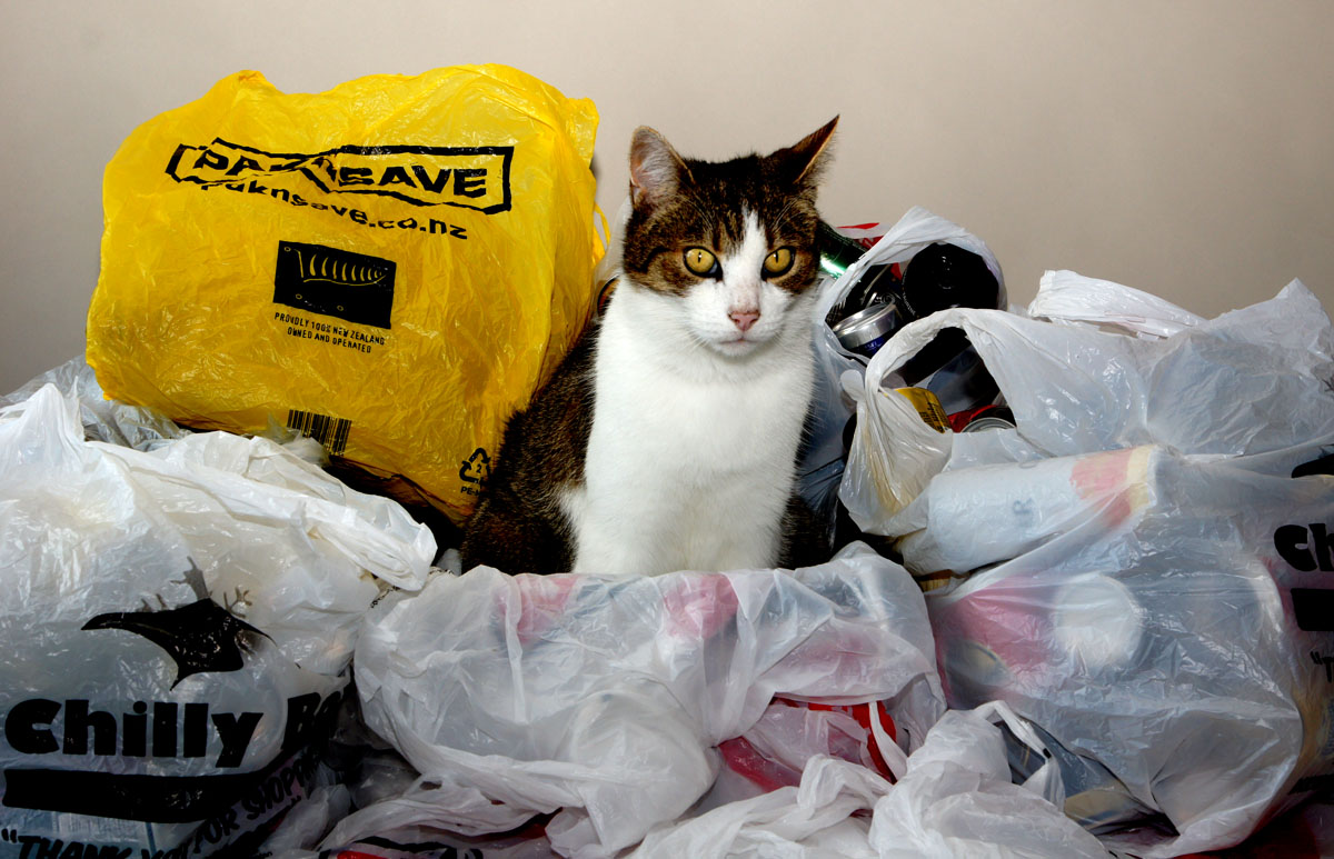Be a cool cat; Ban the bags