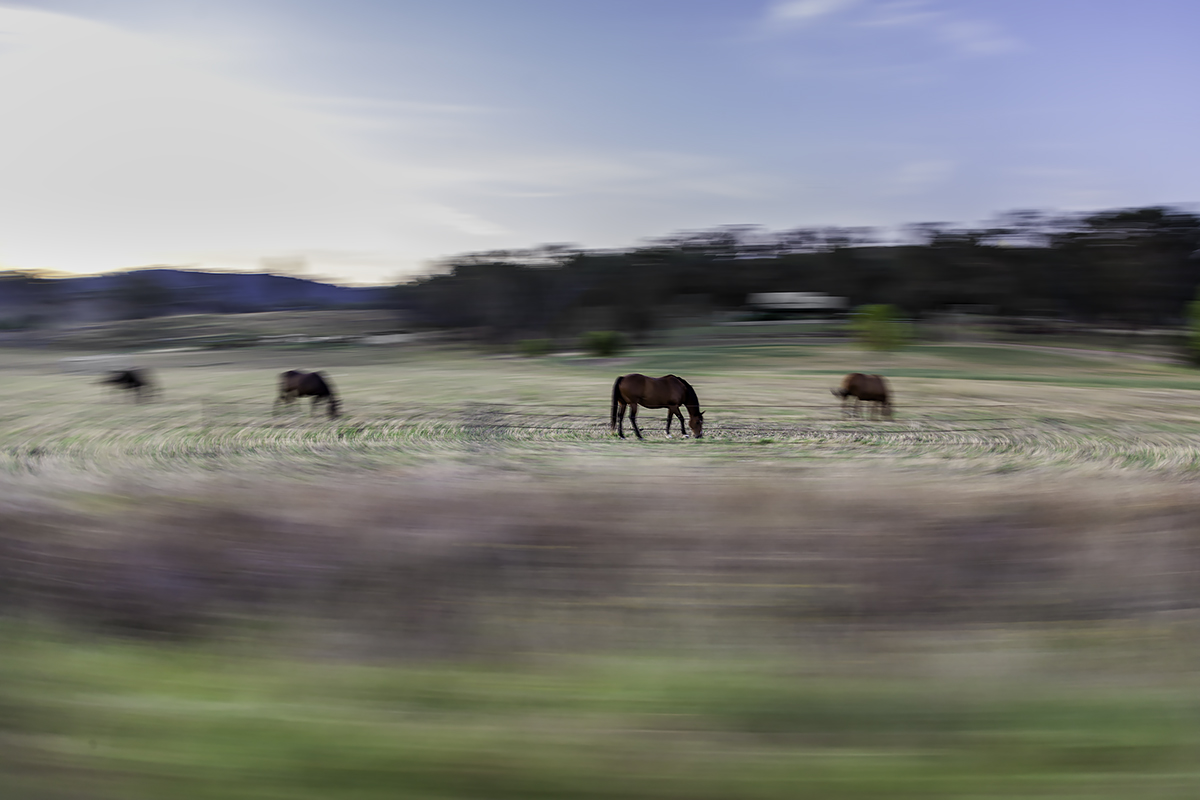 the horse in a paddock