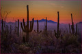 Saguaro Sundown