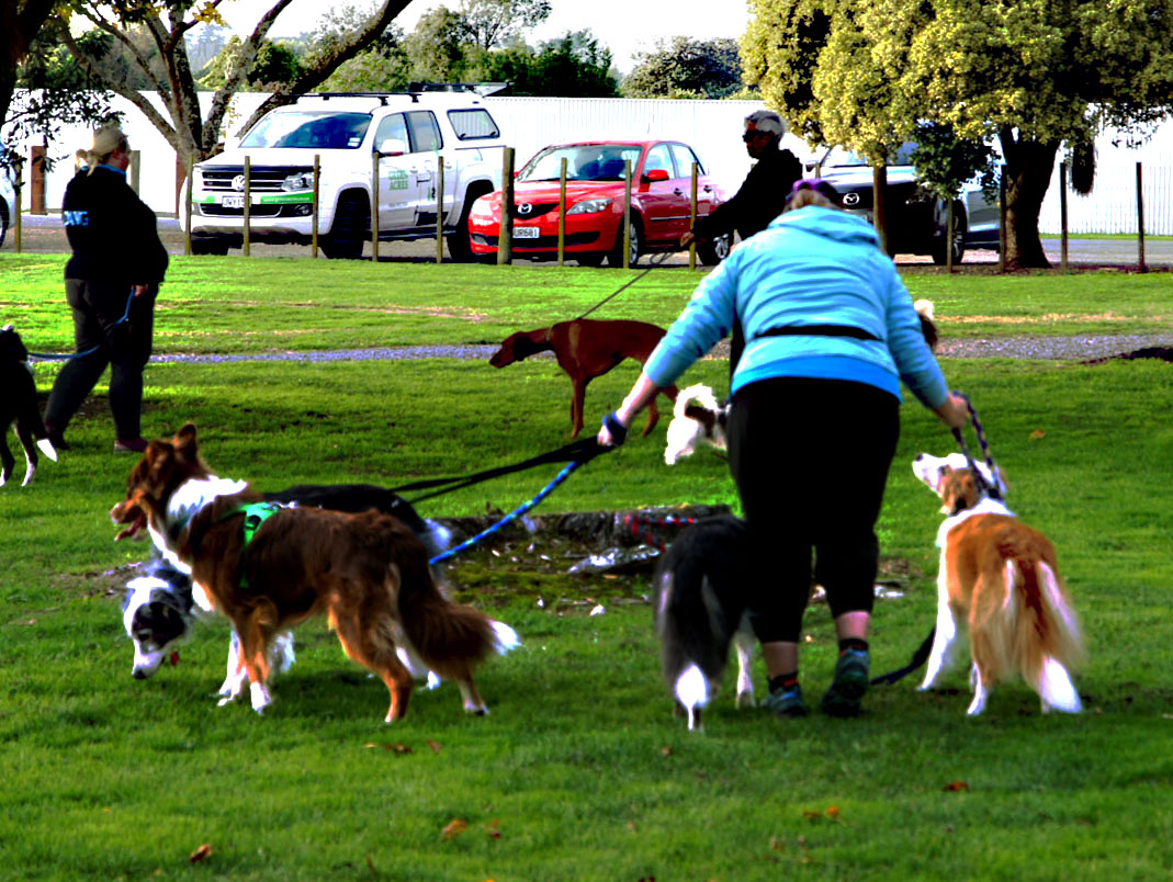 walking dogs , Keeps one fit