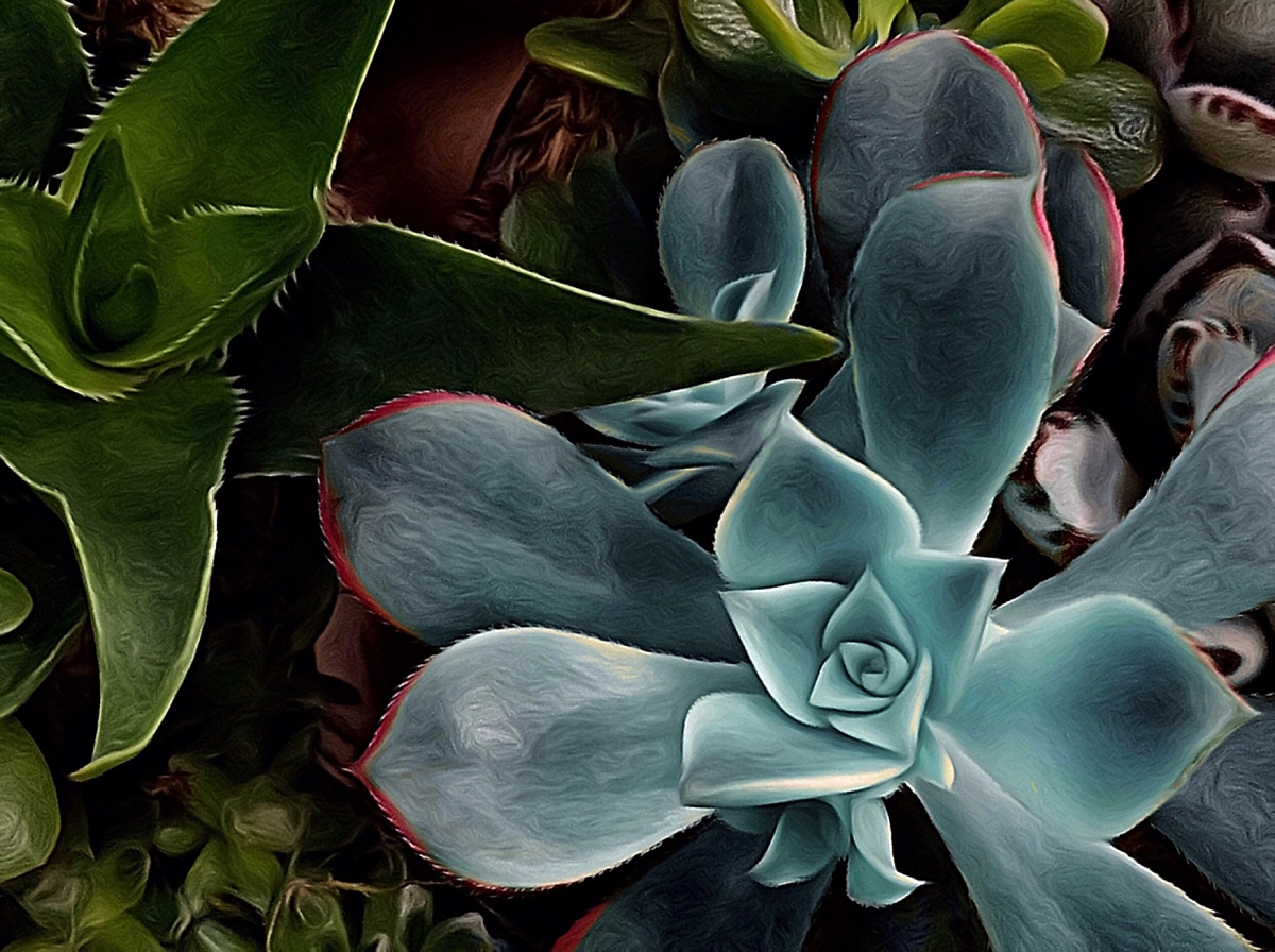 Seductive Succulents