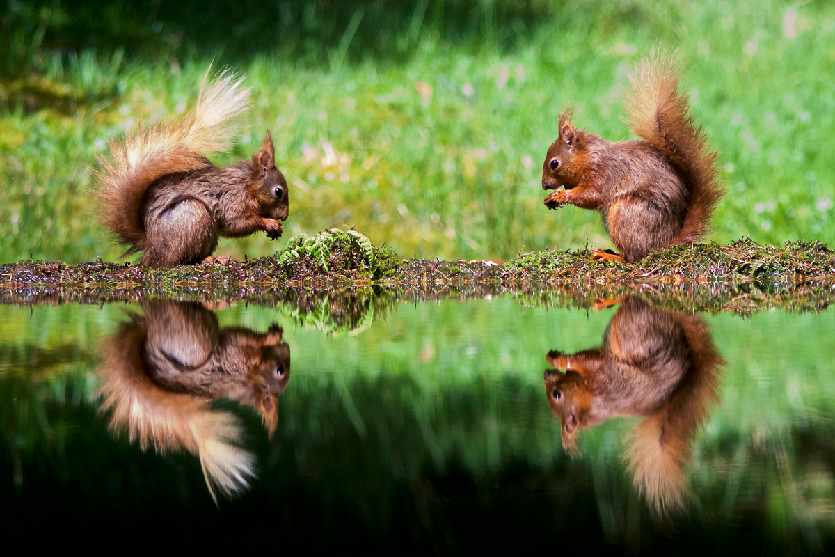 Squirrels Squared