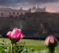 According to legend, the roses would again bloom on the hillside when Serena rose from the moat.