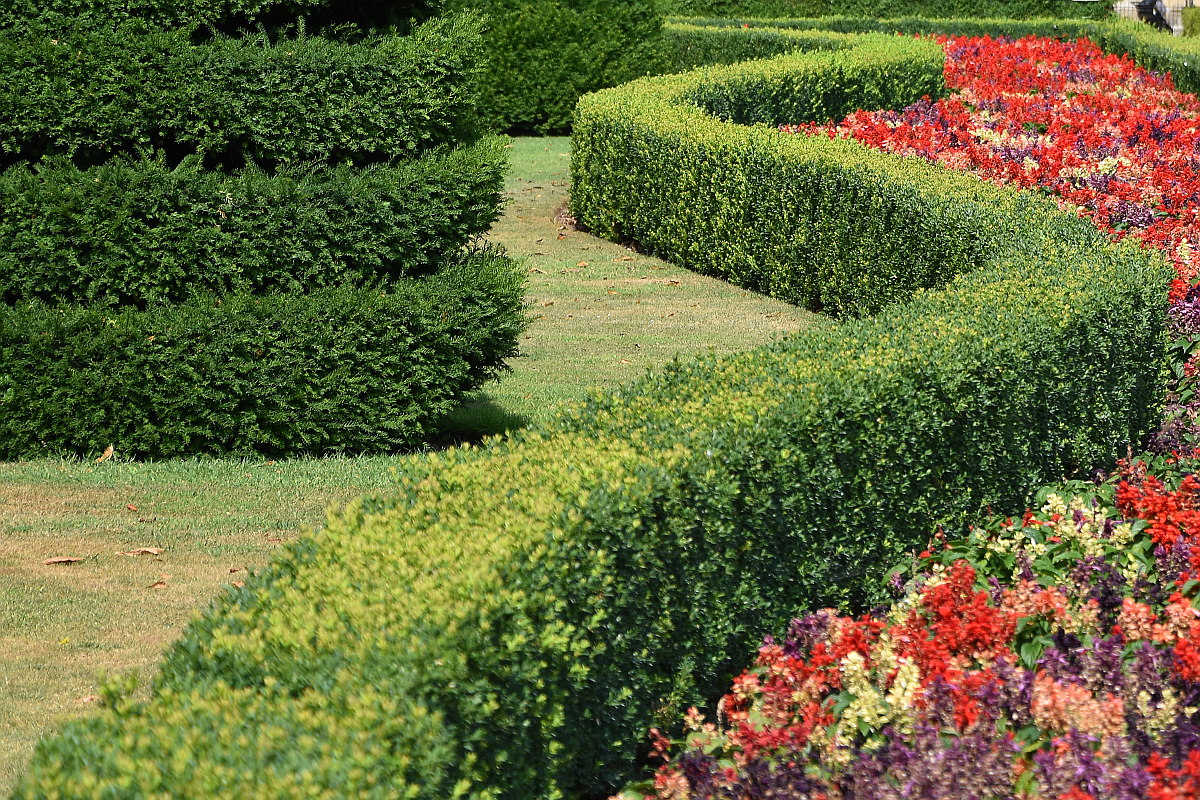 Twisting Hedge