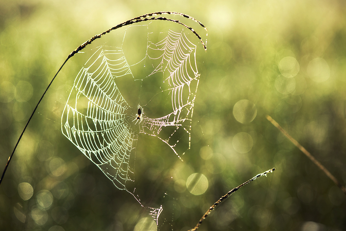 Web In The Meadow
