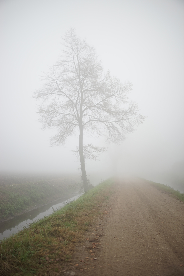 In a foggy day