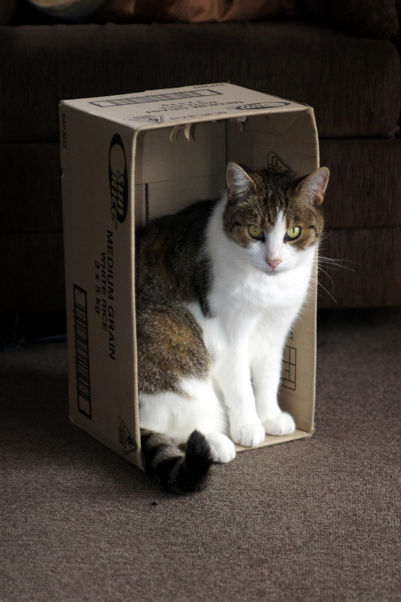 242   CAT in a Carton