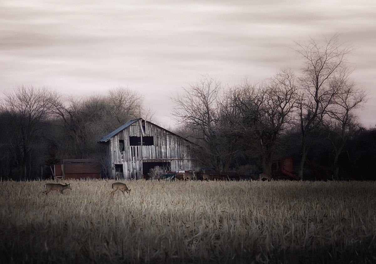 A barn unused is a barn unloved