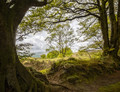 View from the Quantock Hills, Ancient Beeches