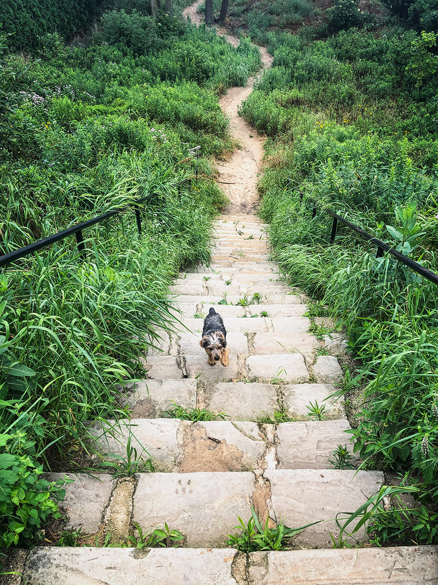 Puppy on the path