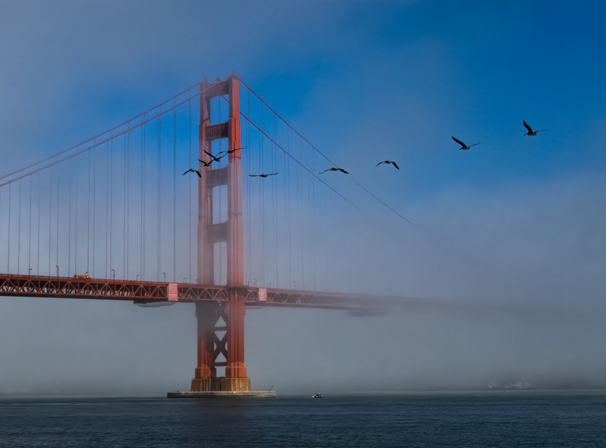 Fog & Pelicans at the Golden Gate