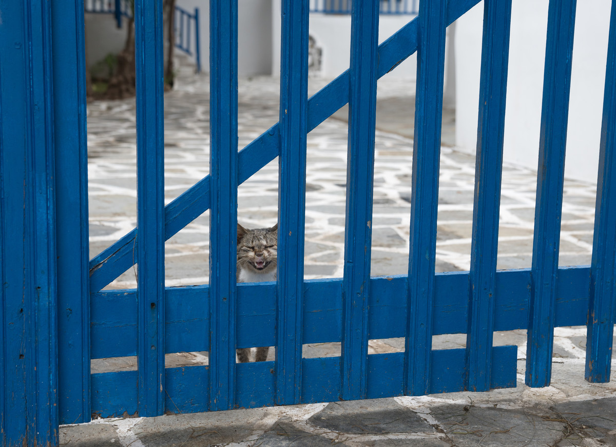 Greek cat home