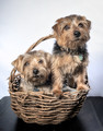 Two boys in a basket