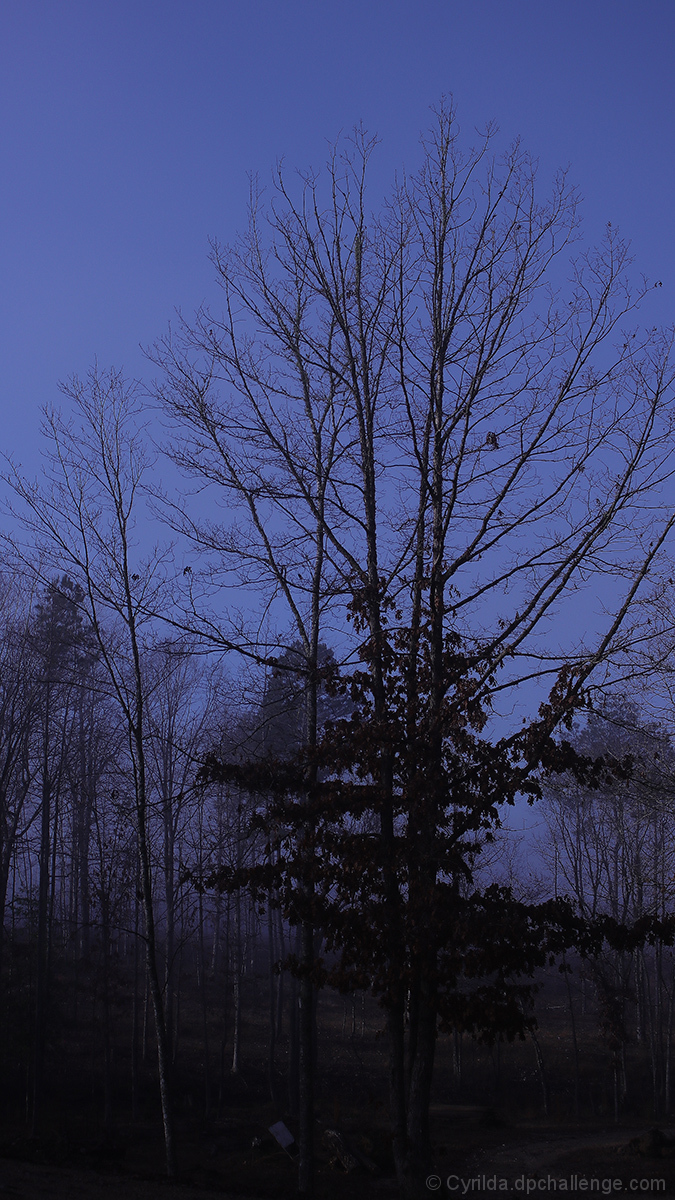 Winter Blue