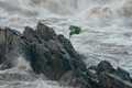 Clinging to Life in the Raging Potomac River at Great Falls