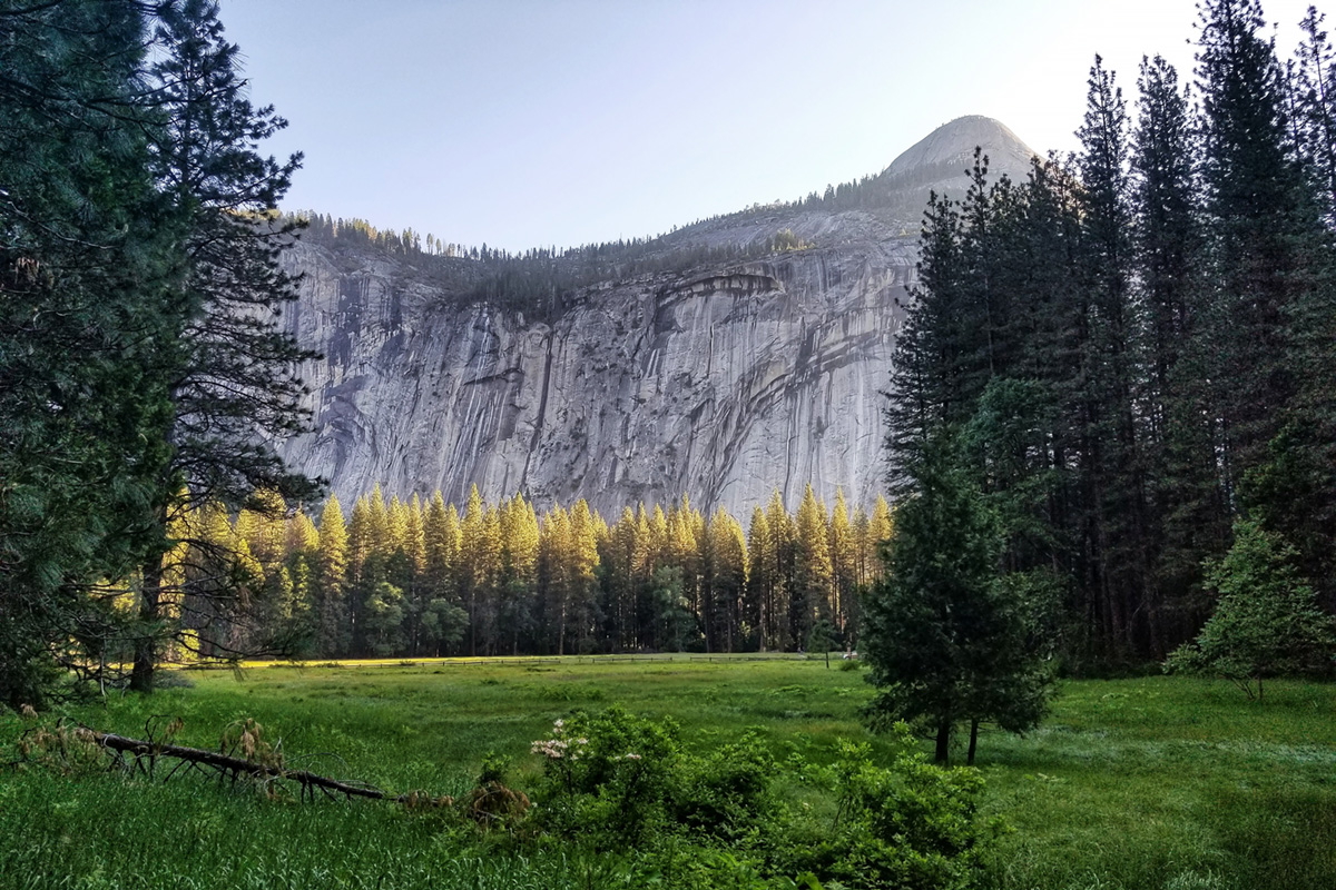 Morning Meadow, Yosemite