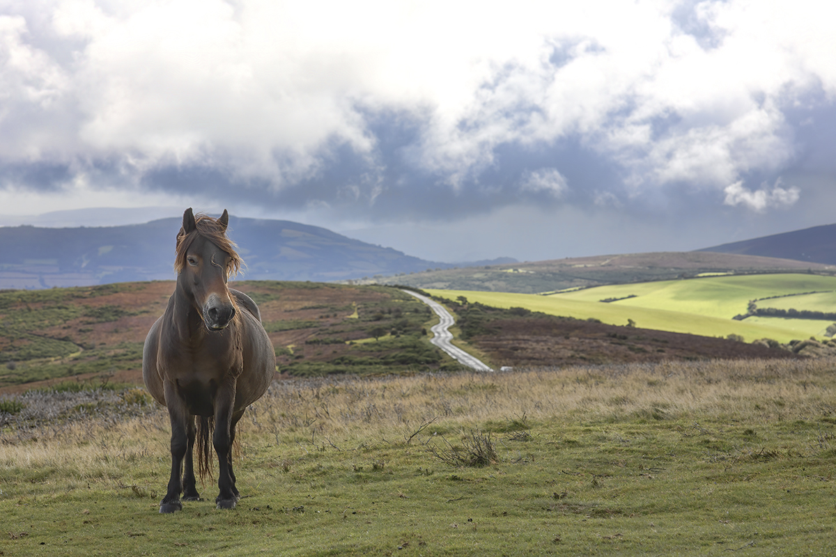 Beloved Exmoor