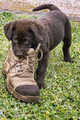 Chewing The Boss's Boots