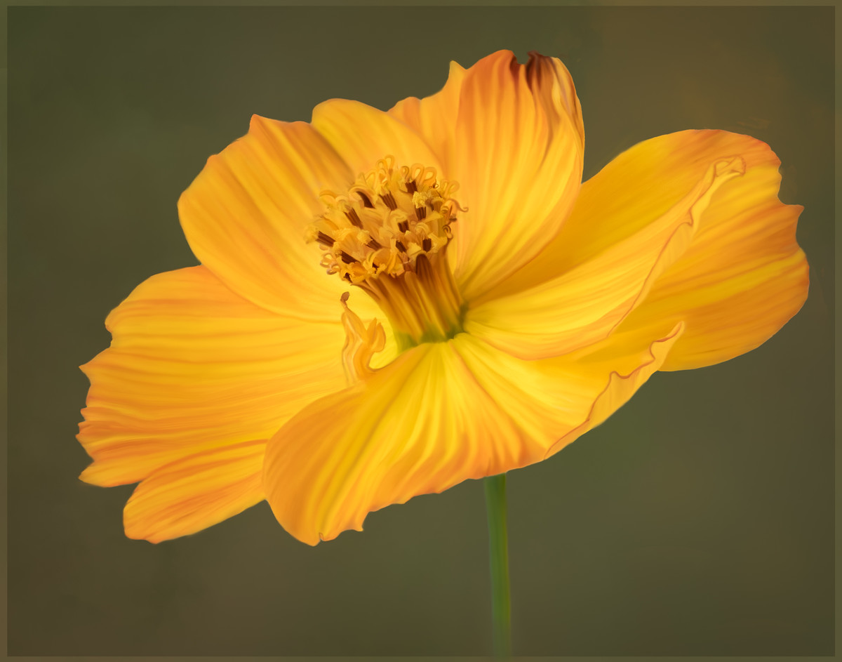 Yellow Cosmos Hand Painted  in PS